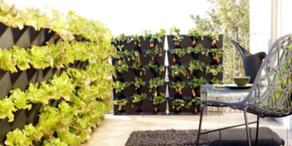 Decoração de Varanda com Jardim Vertical