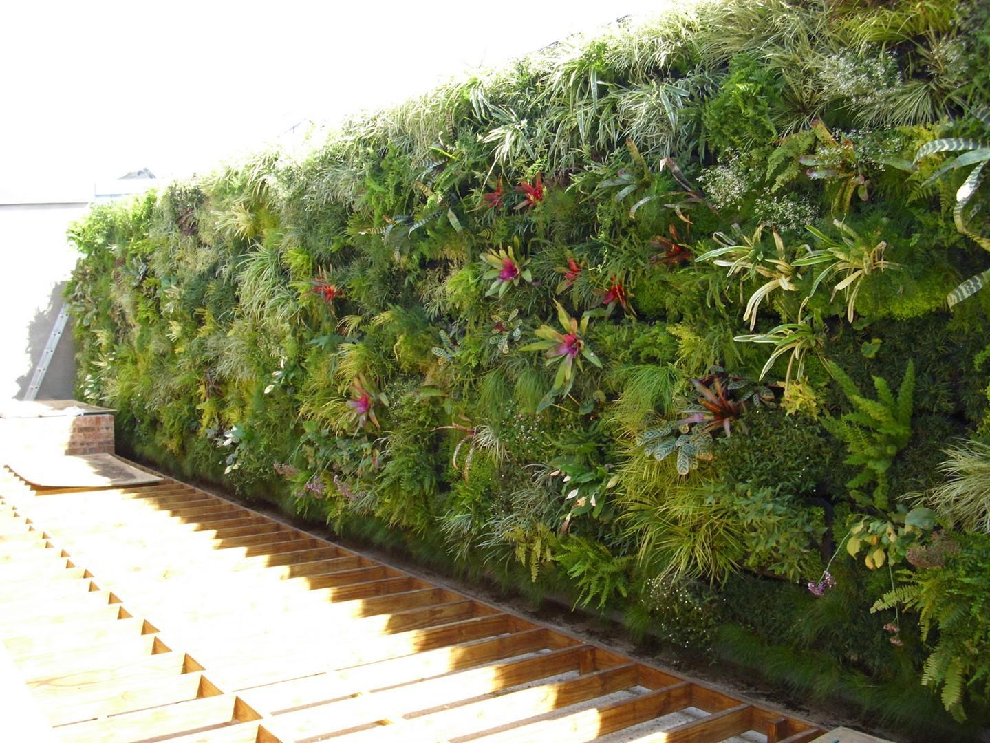 Decora o e projetos fotos de jardins verticais decorados - Plantas para jardin vertical ...