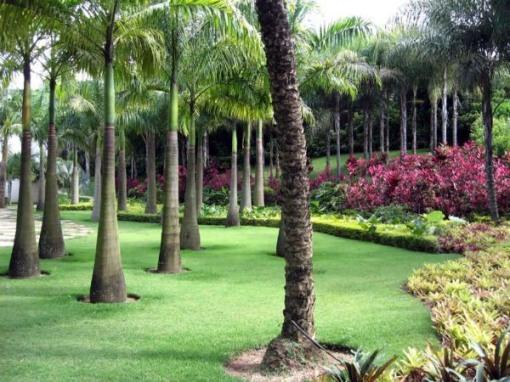 decoracao para jardim de sitio : decoracao para jardim de sitio: Projetos – Fotos de jardins de sítios – Dicas de Decoração