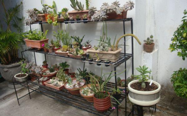 É muito fácil decorar e montar jardim em estante, basta você utilizar criatividade e imaginação e posicionar a estante em um local que receba o destaque merecido (Foto: Divulgação)