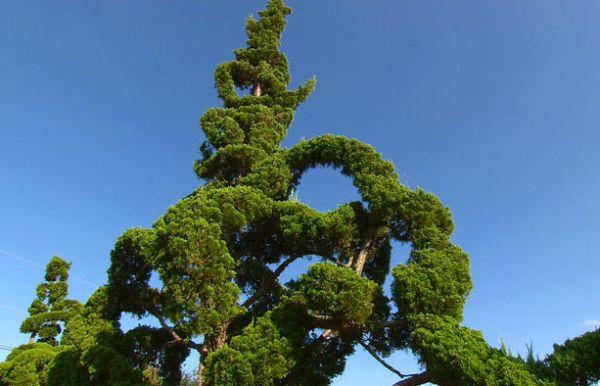 A decoração de jardins com árvores esculturais é uma forma divertida de deixar a sua casa mais interessante (Foto: Divulgação)