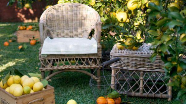 A decoração de jardins com árvores frutíferas é ótima opção em tempos de aquecimento global e de planeta pedindo auxílio (Foto: Divulgação)