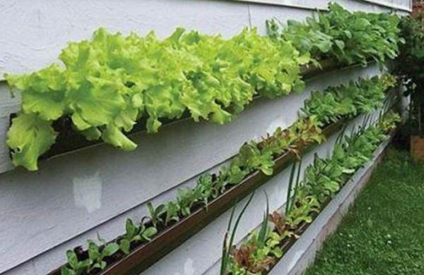 A decoração de jardins com calhas é uma maneira de reciclar suas calhas antigas sem perder o charme tão necessário em um jardim (Foto: Divulgação)