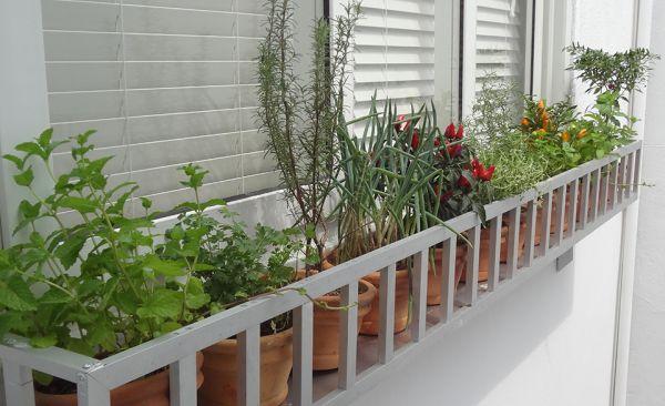 A decoração de horta em varandas garante mais saúde para a sua família, além de beleza estética para a sua casa (Foto: Divulgação)