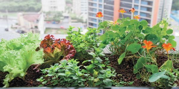 A decoração com horta em apartamentos é ótima forma de repaginar o visual de seu lar e ainda ter em mãos temperos sempre frescos (Foto: Divulgação)