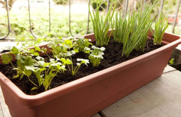 Decoração e Projetos Como Fazer uma Horta Orgânica em um Vaso