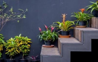 Ideias para decoração de escadas com plantas não faltam, com uma ideia mais interessante que a outra (Foto: westwing.com.br)