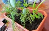 Horta em Apartamento, Como Fazer