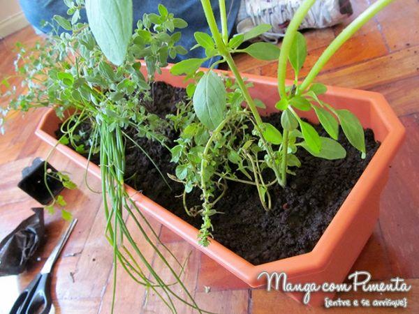 É possível, sim, fazer uma horta em apartamento (Foto: mangacompimenta.com)