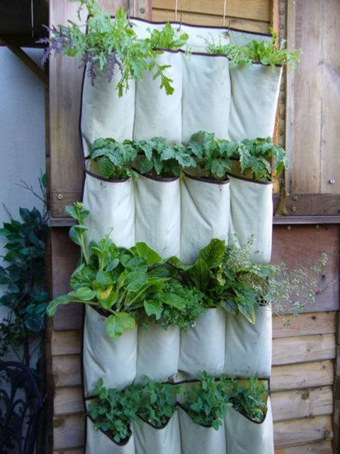 jardim vertical no organizador