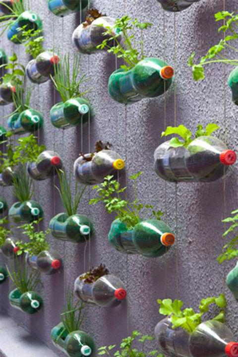 jardim vertical na garrafa pet