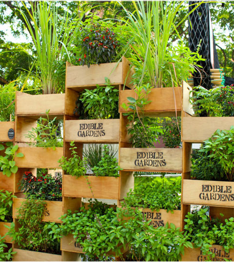 jardim vertical no quintal