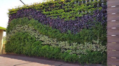 jardim vertical com desenho
