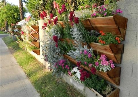 jardim vertical variado