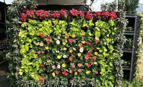jardim vertical flores