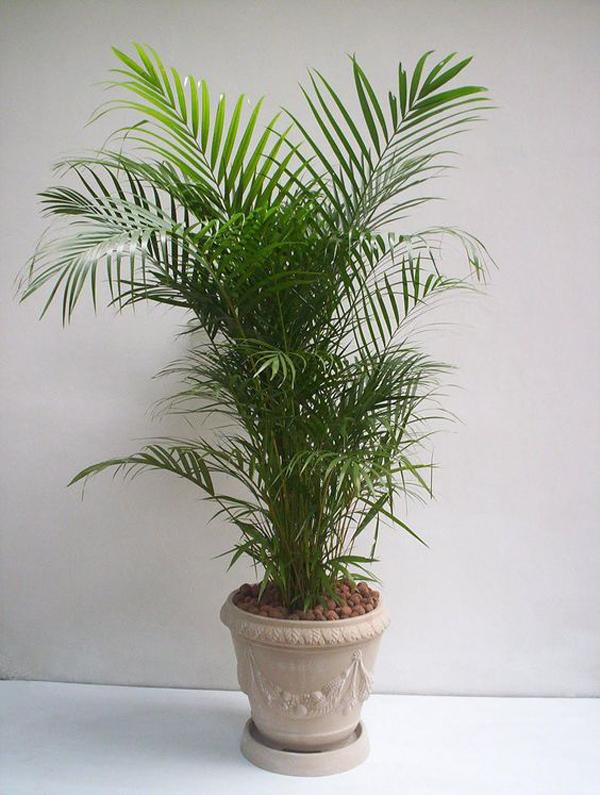 plantas de apartamento palmeira