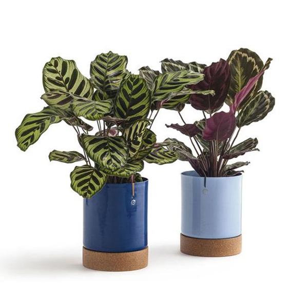 plantas de apartamento colorida