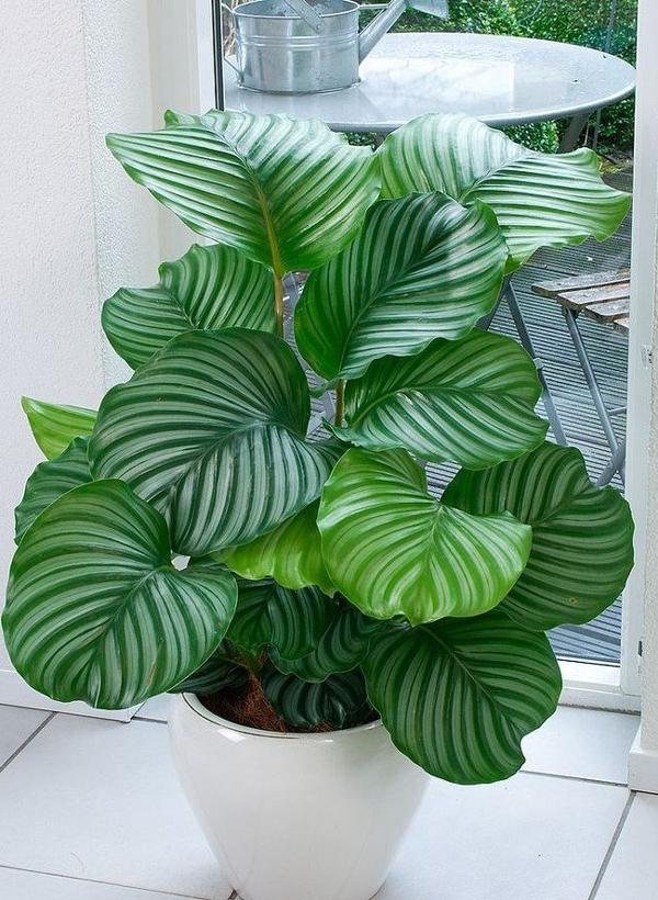 plantas de apartamento verdes
