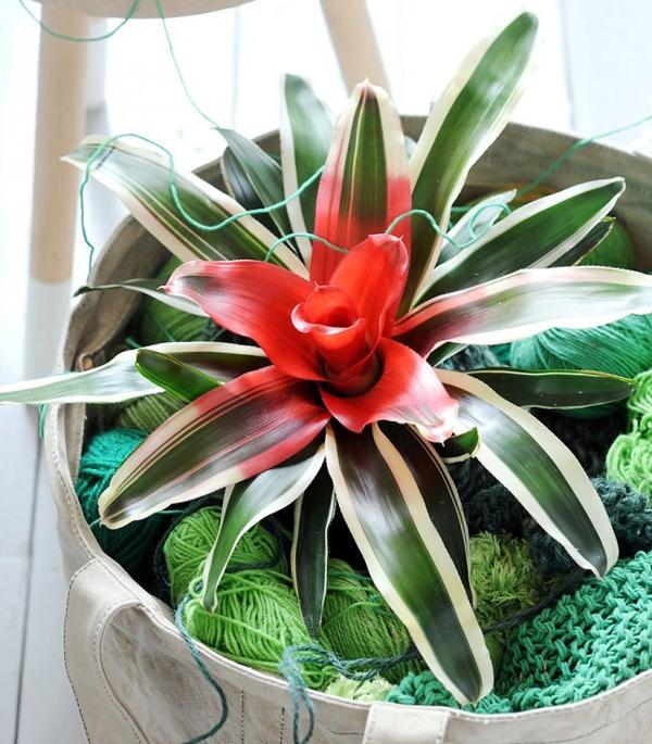 plantas de apartamento com flor