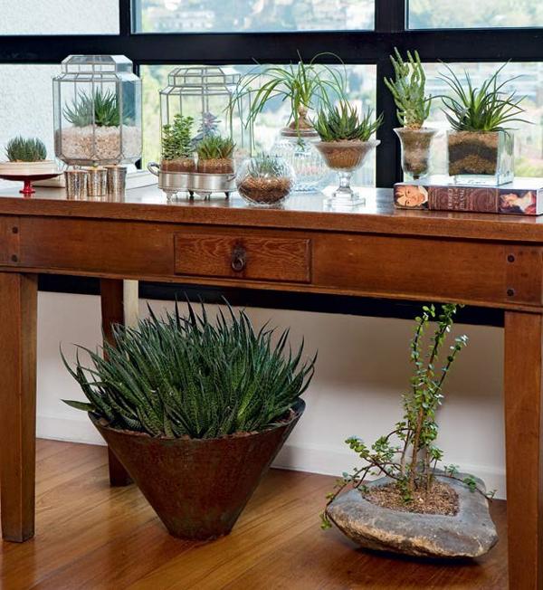 plantas de apartamento suculentas