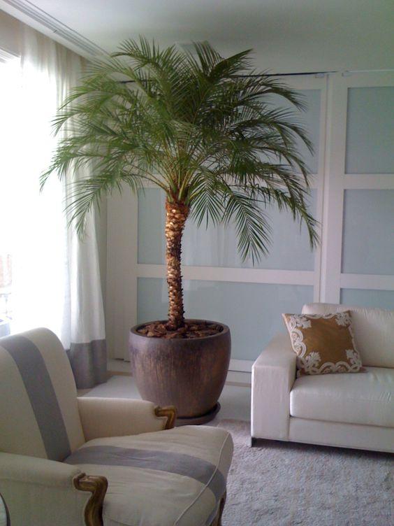 decoração com coqueiro no vaso
