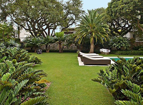 decoração com coqueiro no jardim