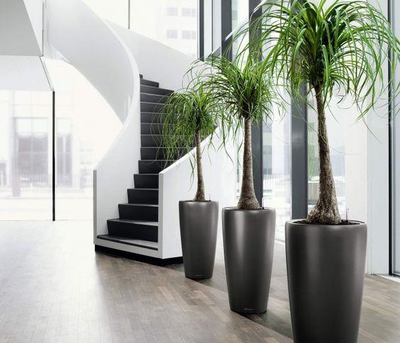 decoração com coqueiro perto da escada