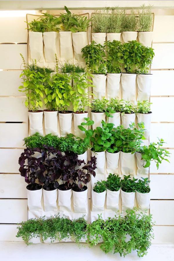 horta vertical sapateira