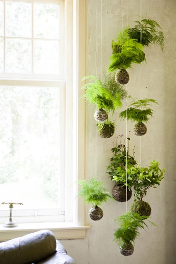 horta vertical pendurado