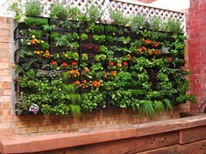 horta vertical no muro