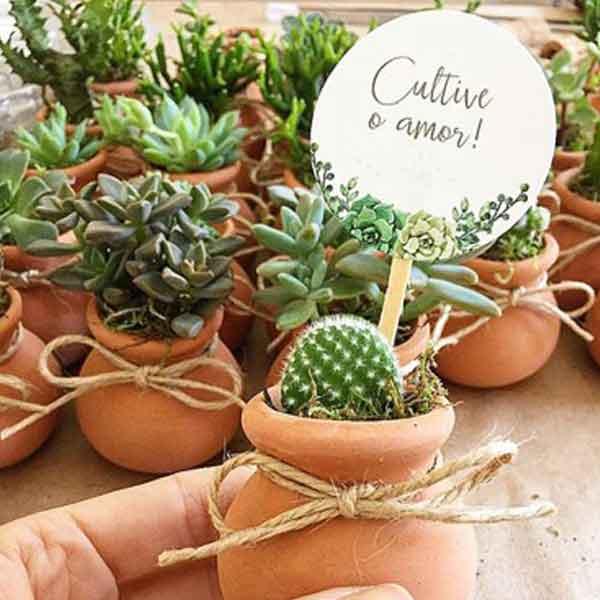 Suculenta plantada em vasinho escrito para cultivar o amor