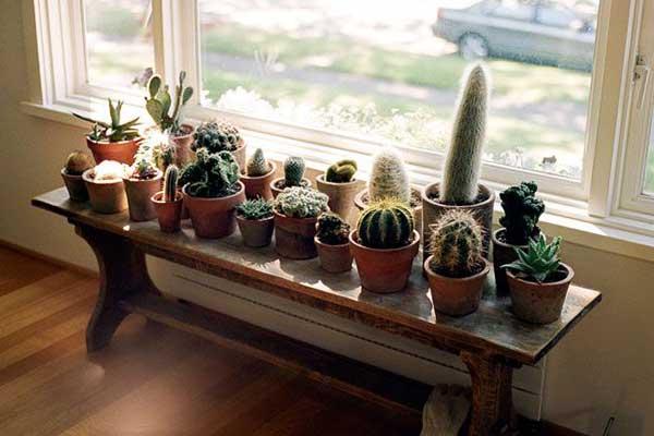 Cactos e suculentas expostos ao sol