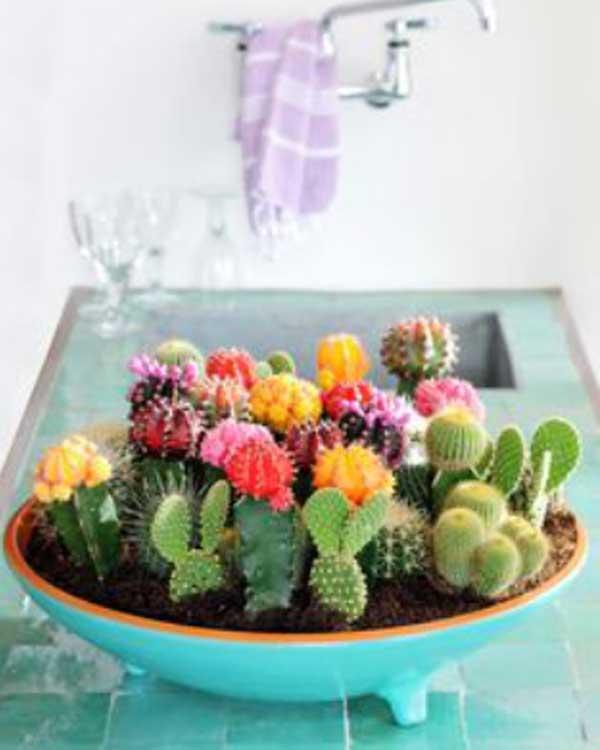 Suculentas plantadas em vaso azul