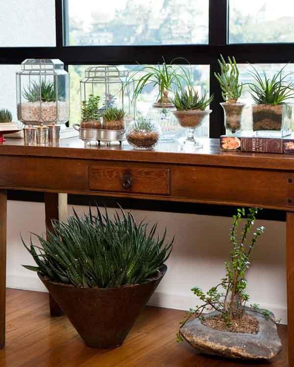 Cactos e Suculentas plantadas em vidros de formatos diferentes