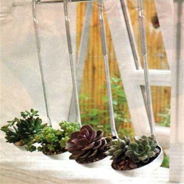 Suculentas plantadas em conchas de cozinha