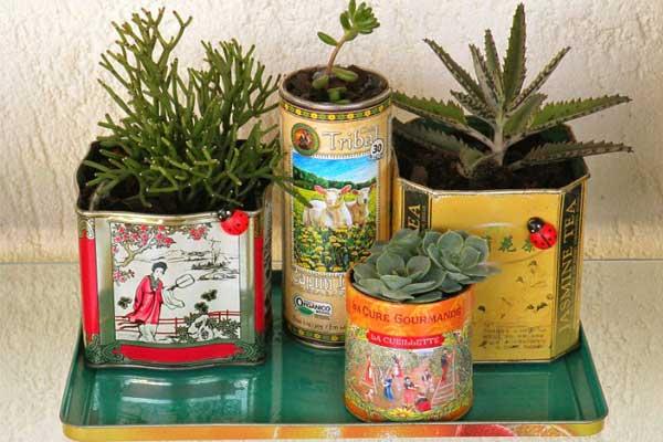 Suculentas plantadas na latinha