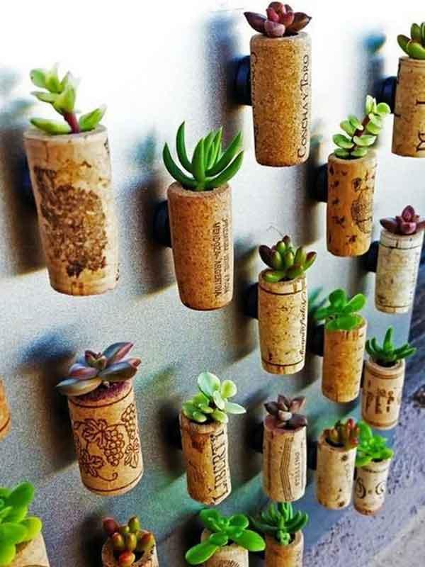 Suculentas plantadas na rolha