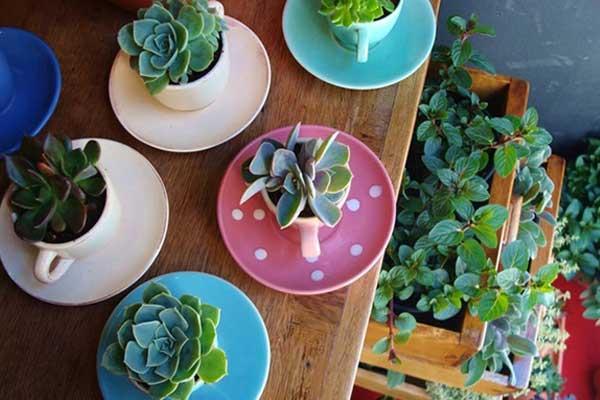 Suculentas plantadas na xícara