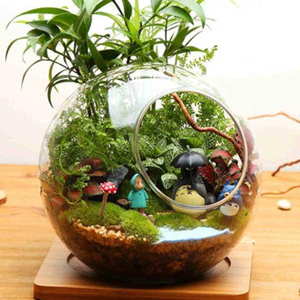 Vaso de vidro com suculentas plantadas