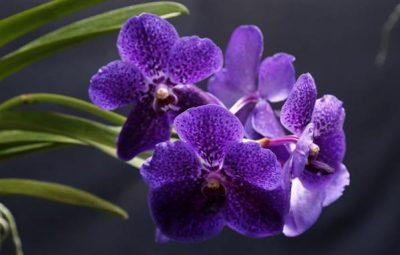 como cuidar de orquideas em vaso de barro